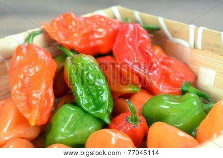 Bhut Jolokia Pepper