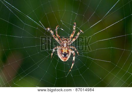 Big spider on a web.