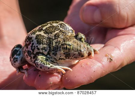 Toad On Hand