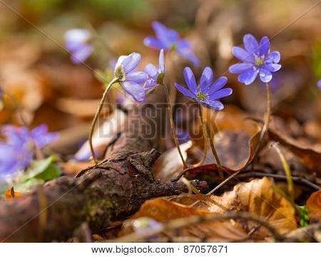 Liverworts Flowers