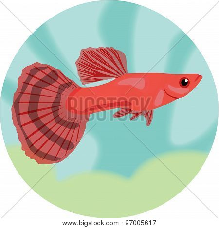 Guppy. Highly detailed vector illustration.