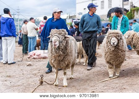 Sheep At Market