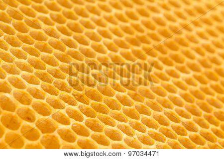 Fresh Unused Drawn Honeycomb.