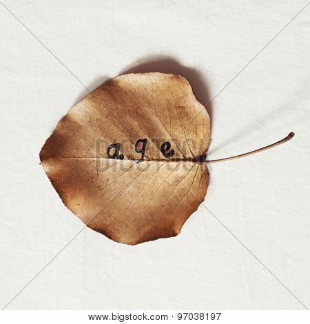 Word Age Stamped On To A Fallen Dead Autumn Leaf