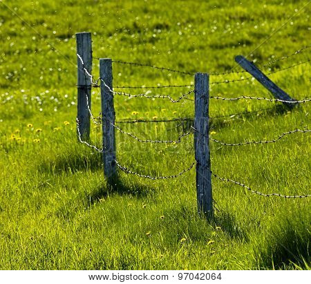 Fence Pasture Green Grass
