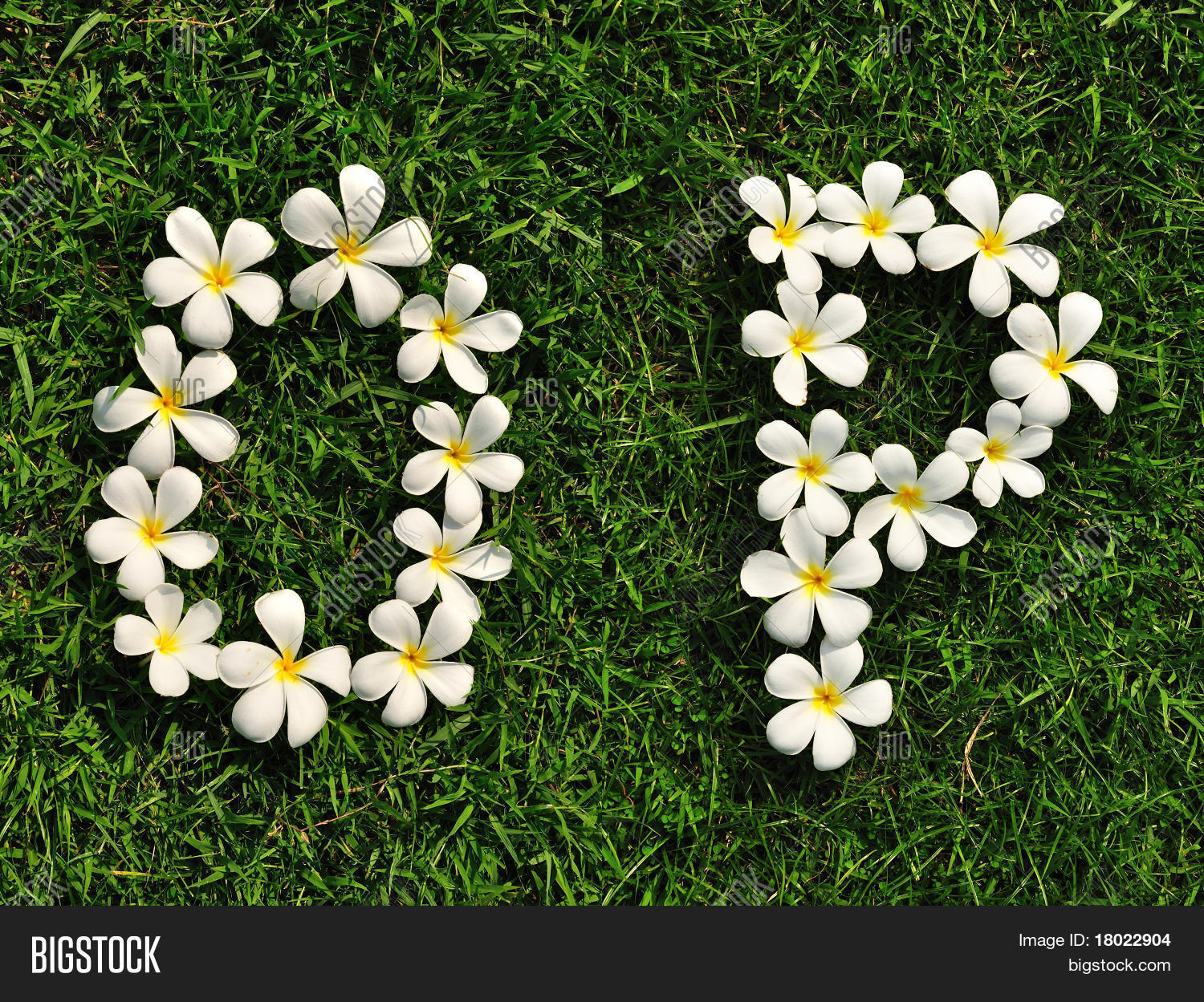 White Tropical Flowers Image Photo Free Trial Bigstock