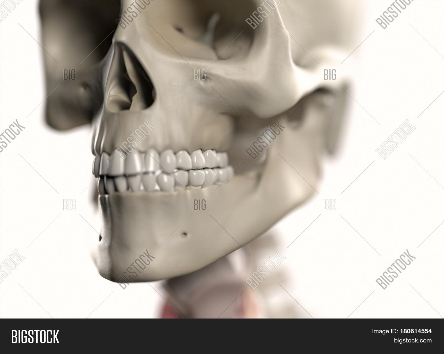 Anatomy Body Human Image Photo Free Trial Bigstock