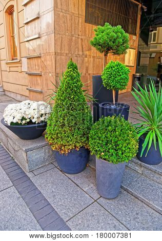 Green Plants And Flowers In Streets In Vilnius