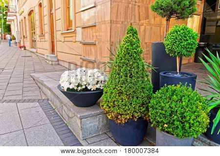 Green Plants And Flowers In Streets Of Vilnius