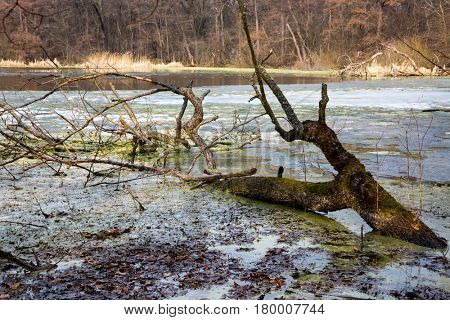landscape with old dead tree in swamp