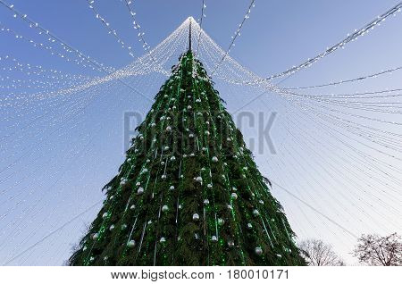 Christmas Tree With Garlands Installed In Evening Vilnius