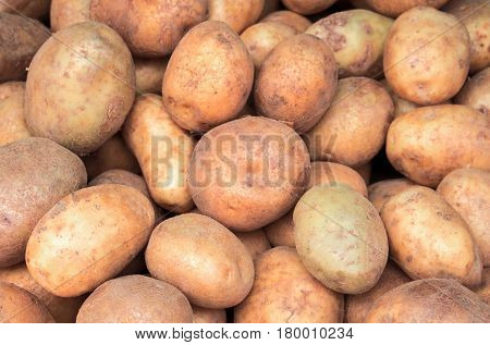Bunch of potato closeup image. Brown and yellow vegetables picture. Vegetarian shop display photo. Picture of raw potato cooking ingredient. Garnet vegetable. French fries or mashed potato ingredient
