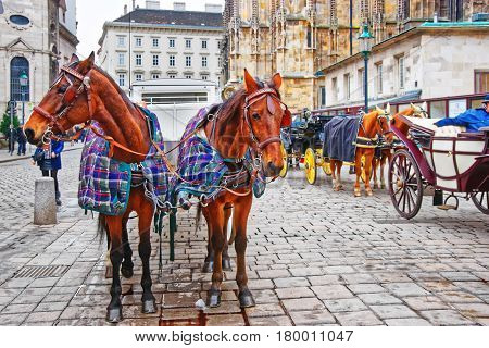 Team Of Horses And Coach At Stephansplatz In Vienna