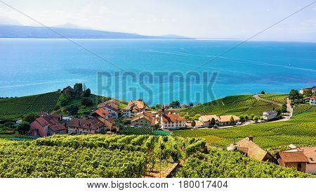 Swiss Chalets At Lavaux Vineyard Terraces Hiking Trail In Switzerland