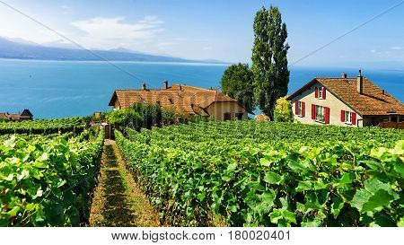 Swiss Chalets At Vineyard Terrace Hiking Trail Of Lavaux Switzerland