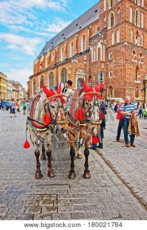 Horse Fiacre And People On Krakow Old Town