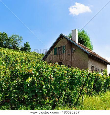 Chalet At Lavaux Vineyard Terraces Hiking Trail Swiss