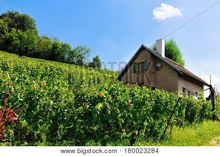 Chalet In Lavaux Vineyard Terraces Hiking Trail Swiss