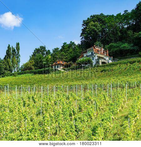 Chalet Near Lavaux Vineyard Terraces Hiking Trail Swiss