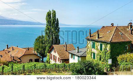 Chalets In Vineyard Terraces Hiking Trail Of Lavaux In Switzerland