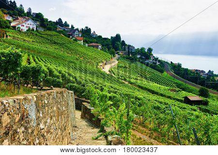 Countryside In Lavaux Vineyard Terrace Hiking Trail Switzerland