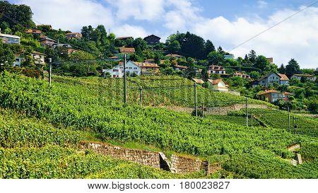 Railroad In Lavaux Vineyard Terraces In Switzerland