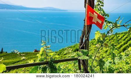 Swiss Flag On Vineyard Terraces Hiking Trail Lavaux Of Switzerland