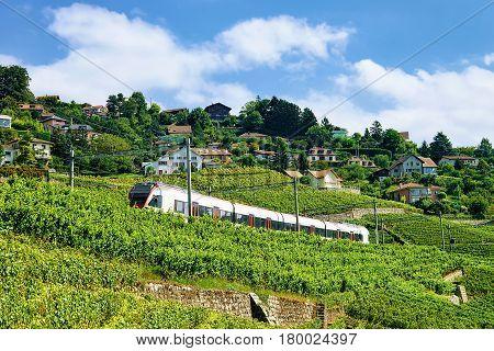 Train At Railroad At Lavaux Vineyard Terrace