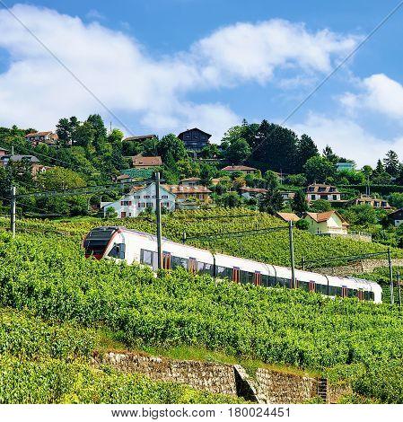 Train At Railroad On Lavaux Vineyard Terrace