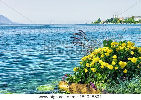 Flowers Bloom At Embankment Of Geneva Lake In Montreux