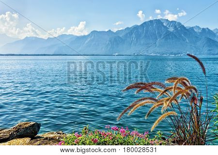 Flowers Blooming In Promenade Of Geneva Lake In Montreux