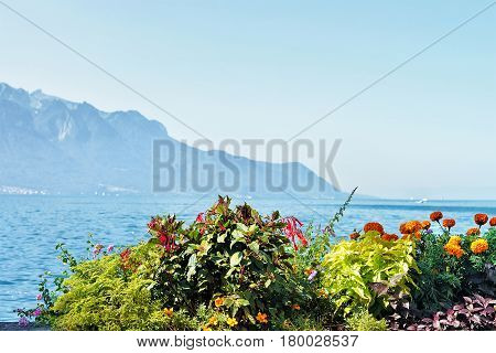 Flowers Blooming On Embankment Of Geneva Lake In Montreux