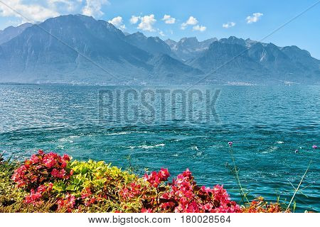 Flowers Blossoming On Embankment Of Geneva Lake In Montreux