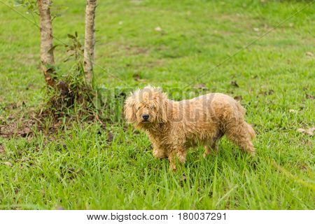 homeless stray dog in the green grass
