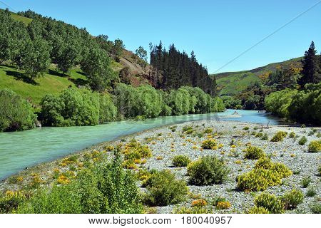 Hurunui River in Spring Canterbury New Zealand. In the foreground is the river bed along with wild Lupin flowers.