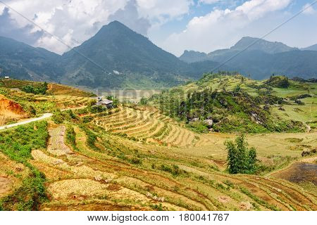 View Of Terraced Rice Fields Among The Hoang Lien Mountains