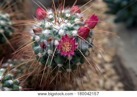 red cactus flowers small tiny beautiful lovely