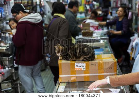 Hong Kong Hong Kong - March 10 2017: cat sitting on a parcel in a shop in Hong Kong with unidentified person. Hong Kong is the 4th most densely populated state