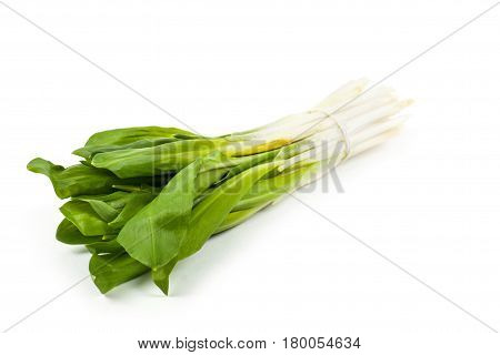 Ramsons Isolated On A White Background.