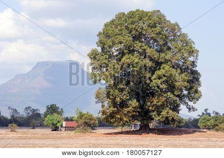 Rural Landscape At Champasak