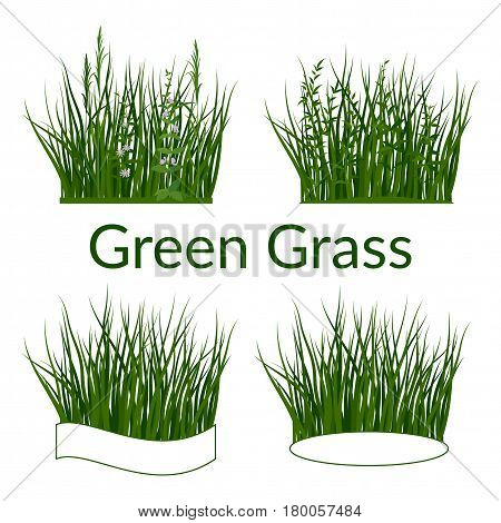 Set of Summer and Spring Landscape Elements, Green Grass, Lilac Flowers and Place for Your Text, Isolated on White Background. Vector