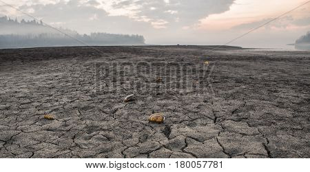 Dried lake and cracked earth Slovakia Scallops on the ground.