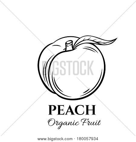 Hand drawn peach icon. Vector badge fruit in the old ink style for brochures, banner, restaurant menu and market