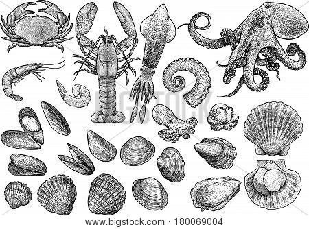 Seafood, shrimp, prawn, crab, lobster, squid, octopus, mussels, scallop, clam, oyster, cockle shell  collection illustration, drawing, engraving, ink, line art