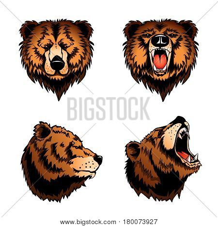 Colored set of four isolated bear heads in profile and front view on white background cartoon vector illustration