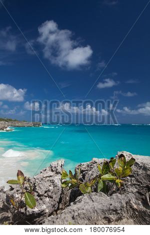 Bottom Bay is one of the most beautiful beaches on the Caribbean island of Barbados, tropical paradise with palms hanging over turquoise sea