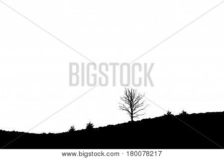 Single Tree On Sloping Heathland, Posbank Rheden Netherlands