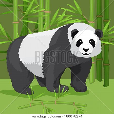Black and white heavy panda stands on four paws on growing green bamboo background. Vector illustration in cartoon style flat graphic design of cute rare bear