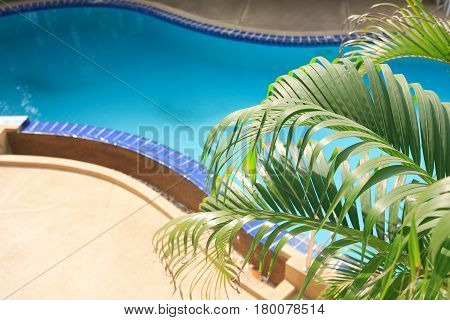 Closeup of elegant empty water pool with blue water near palm