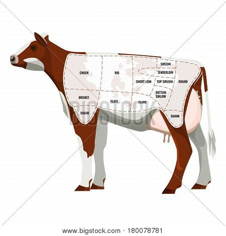 Caw steak parts, beef cattle parted into departments icon isolated on white. Brown and whitey cow body divided into meat ham types. Vector illustration of kine beefs flesh graphic design cartoon style